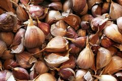 I chiodi di garofano di allium sativum dell'aglio si chiudono su Immagine Stock