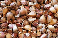I chiodi di garofano di allium sativum dell'aglio si chiudono su Immagini Stock