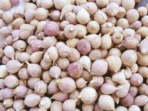 I chiodi di garofano di aglio si chiudono su Fotografia Stock Libera da Diritti
