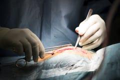 I chirurghi in morsetto sterile dell'ago dei guanti hanno suturato la ferita Fotografie Stock