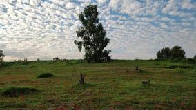 I cieli e la terra immagini stock libere da diritti