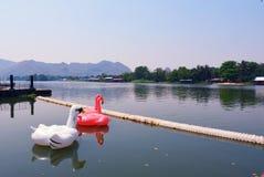 I cigni giocano sulla provincia Tailandia di kanchanaburi del fiume di riverkwai Fotografie Stock Libere da Diritti