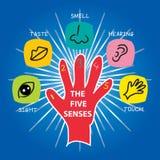 I cinque sensi illustrazione di stock