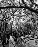 I cittadini anziani ballano all'aperto parco famoso del ` s di Kyiv nell'idro - KIEV - UCRAINA Fotografia Stock Libera da Diritti