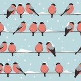 I ciuffolotti si siedono sui cavi sotto la neve Immagini Stock Libere da Diritti