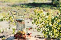 I cocktail dell'estate con frutta stagionale in caraffa di vetro trasparente sta su una tavola in un giardino accanto ad un beche Immagini Stock