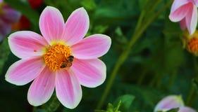 I colori dei fiori Fotografia Stock