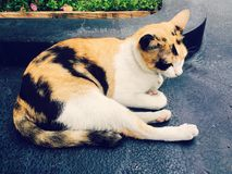 I colori del gatto tre Fotografia Stock Libera da Diritti
