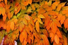 I colori dell'autunno immagini stock