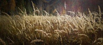 I colori dell'autunno Immagine Stock