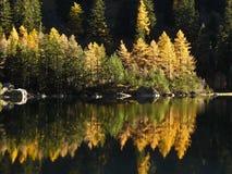 I colori dell'autunno Immagini Stock Libere da Diritti