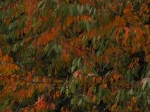 I colori dell'autunno - Francia immagini stock