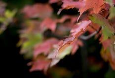 I colori della caduta, foglie stanno cambiando Immagine Stock Libera da Diritti