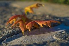 I colori della caduta la bellezza della stagione Fotografie Stock