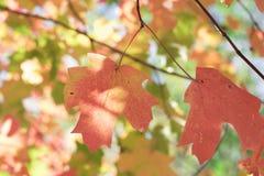 I colori della caduta, o lo chiamano autum Fotografia Stock Libera da Diritti