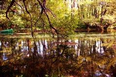 I colori della foresta Fotografie Stock Libere da Diritti