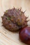 I colori delle castagne di autunno Immagine Stock Libera da Diritti