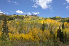 I colori di autunno di caduta in Kebler passano, Colorado America in Autumn Fall Fotografie Stock Libere da Diritti