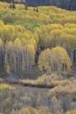 I colori di autunno di caduta in Kebler passano, vicino alla città della collina crestata, Colorado America Fotografie Stock Libere da Diritti