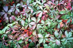 I colori di autunno ed i concetti di autunno degli alberi copre di foglie verde fotografie stock libere da diritti