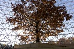 I colori di caduta della lampadina dell'albero dentro un metallo ingabbiano il simbolo fotografia stock libera da diritti