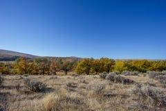 I colori di contrasto di autunno con il campo di erba secca e del cielo blu fotografia stock