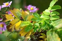 I colori di estate Fotografia Stock