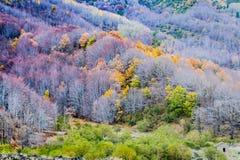 I colori di Etna Fotografia Stock Libera da Diritti