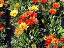 I colori luminosi gradiscono il sole Immagini Stock Libere da Diritti