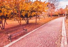 I colori variopinti porpora gialli e rossi di autunno delle foglie nel parco all'aperto con una strada e un legno bench Immagini Stock Libere da Diritti