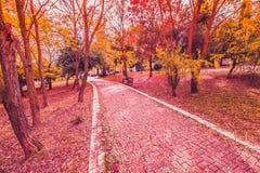 I colori variopinti porpora gialli e rossi di autunno delle foglie nel parco all'aperto con una strada e un legno bench Fotografie Stock Libere da Diritti