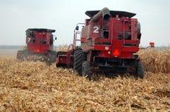 I Combines stanno raccogliendo il cereale Fotografia Stock