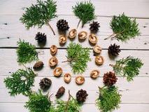 i coni e le noci della foresta del cipresso del ramo si trovano su un fondo bianco Fotografie Stock Libere da Diritti