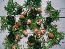 i coni e le noci della foresta del cipresso del ramo si trovano su un fondo bianco Immagine Stock Libera da Diritti