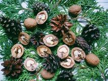 i coni e le noci della foresta del cipresso del ramo si trovano su un fondo bianco Immagini Stock Libere da Diritti
