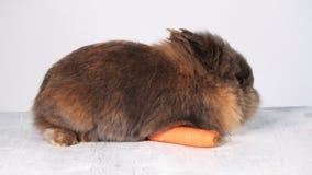 I conigli si siedono su di legno-piano bianco nello studio, pianamente, casa video d archivio