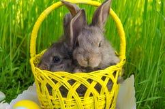 I coniglietti di pasqua nel canestro di Pasqua con pasqua hanno colorato le uova Immagini Stock