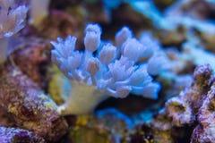 I coralli sono molto vicini fotografie stock libere da diritti