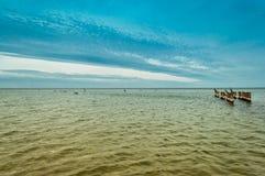 I cormorani inizianti lungamente Fotografie Stock Libere da Diritti