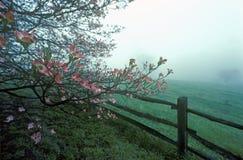 I cornioli e la ferrovia spaccata recintano la nebbia della molla, Monticello, Charlottesville, VA Fotografia Stock