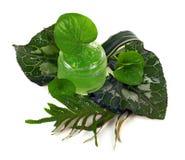 I cosmetici scremano nel barattolo verde Fotografie Stock Libere da Diritti