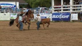 I cowboy del rodeo - vitello che Roping al rallentatore - tagliano 1 di 7 stock footage