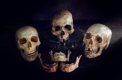 I crani dirigono la natura morta Fotografie Stock