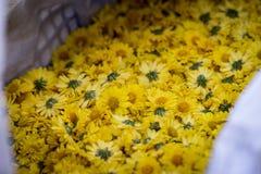 I crisantemi Immagine Stock