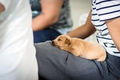 I cuccioli stanno dormendo fotografia stock