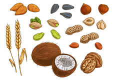 I dadi, il grano ed i noccioli vector le icone di schizzo royalty illustrazione gratis