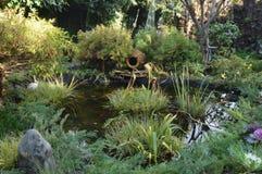 9 I dammet i parkera som simmar den röda fisken Fotografering för Bildbyråer