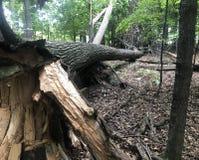 I danni provocati dal maltempo portano gli alberi giù immagini stock