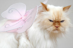I dare you to make a wish!. Cat fairy, cat with wings. Lexus the cat. Go ahead, make my day Royalty Free Stock Photography