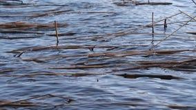 I de stora vågorna för vind på sjön stock video